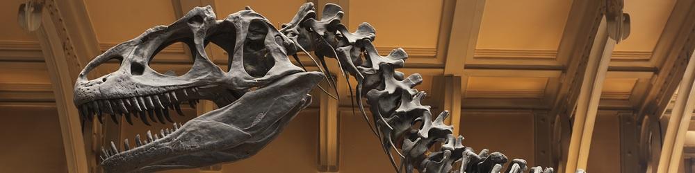 imagen museo metropolitan arte moderno historia natural